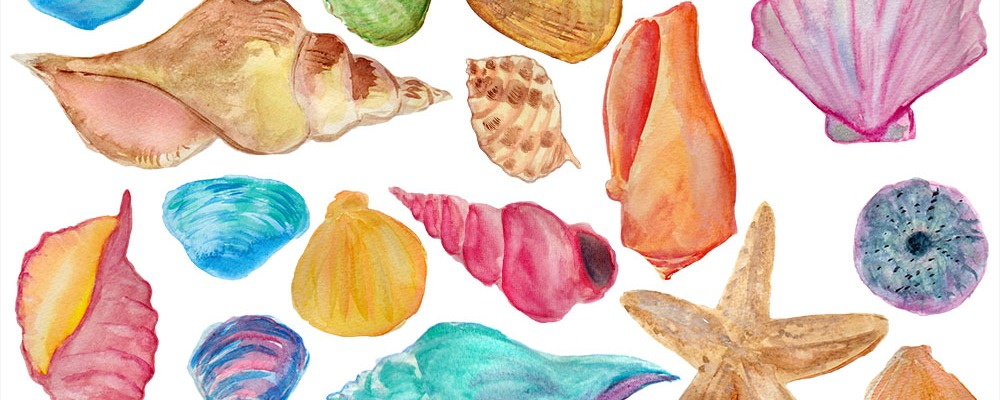 Clipart SEA SHELLS Hand Painted Watercolor Sea Shells